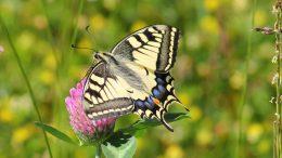 Belen e la farfallina