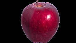 Ricorso per multa su mela importata